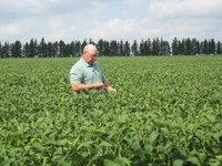 NDSU Extension soil science specialist Dave Franzen examines soybeans in a field. (NDSU photo)