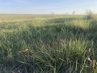 Fall green-up from August and September rains following the severe drought of 2021. (NDSU Photo)