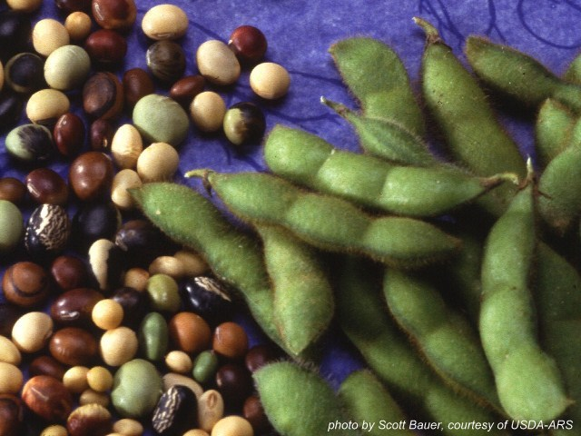 14 Soybeans