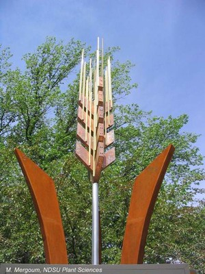 Wheat Spike Sculpture, NDSU Campus
