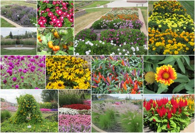 Horticulture Gardens collage