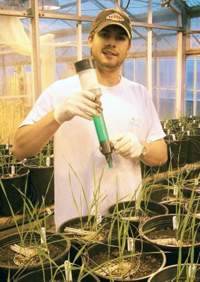 Insecticide research