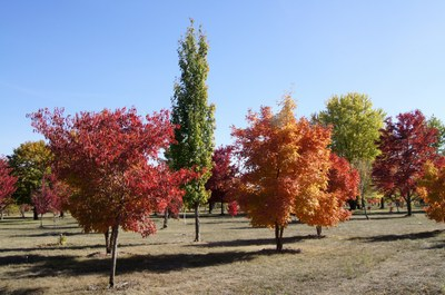 Research arboretum displaying fall color