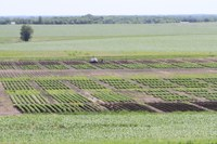 2016 Crop Year Potato Research Reports