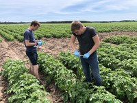 2019 Crop Year Research Reports