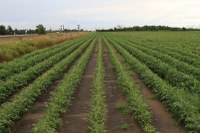 Best of the Best in Wheat and Soybean Research