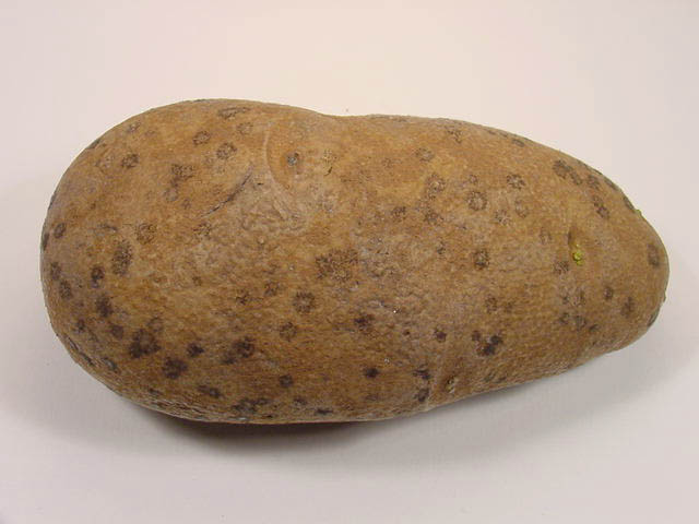 Image Result For Red Seed Potatoes