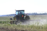 Cover Crops in Potatoes