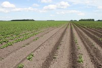 Herbicide Carryover in the Soil, What Does it all Mean?
