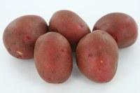 Keep Calm and Keep Eating Potatoes