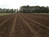 Potato Seed Calculation