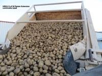US Seed Potato Acres Increased 3.8%