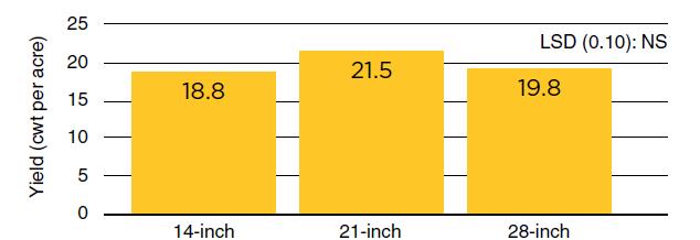 bar graph of black bean seed yield among row spacings