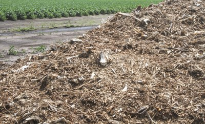 Composted turkey piled in field