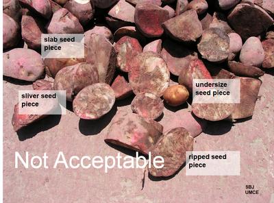 poorly cut seed