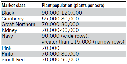 Comprehensive Guide on Dry Beans Production