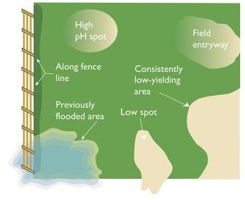 Soybean cyst nematode soil sampling