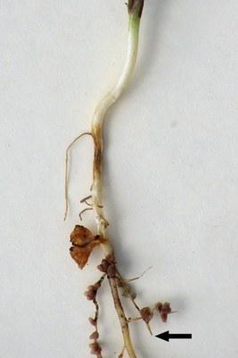 PP1960 Figure 3b