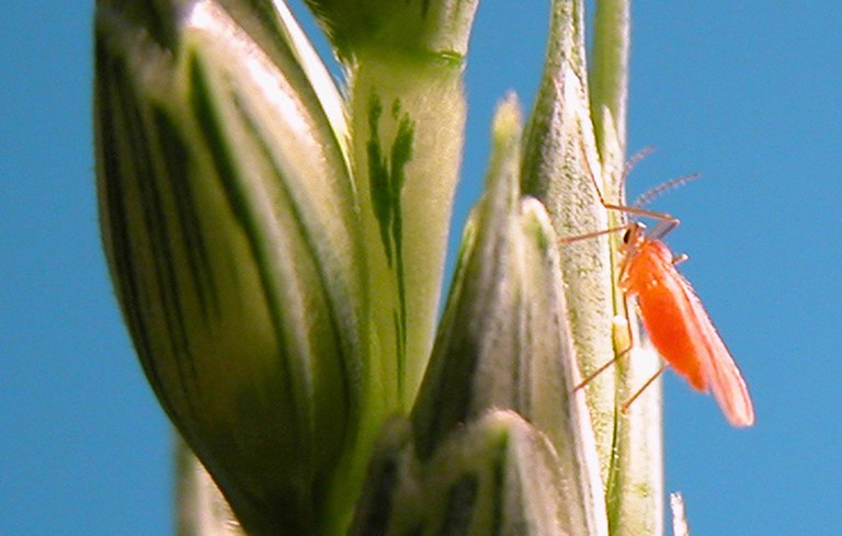 Photo by Extension Entomology, NDSU