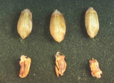 Figure 15 Coparison of kernels