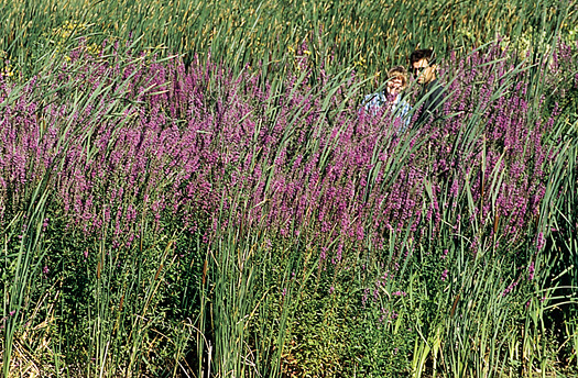 ND wildlands become purple