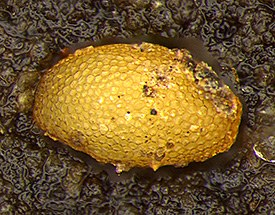 Close up of single egg