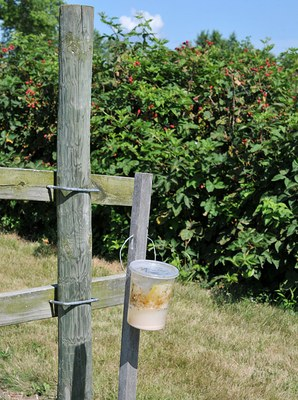 SWD trap mounted on post