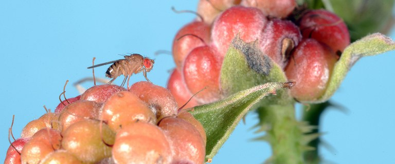 Photo, John Obermeyer, Purdue Extension Entomology