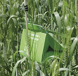 Sex pheromone trap to monitor wheat midge