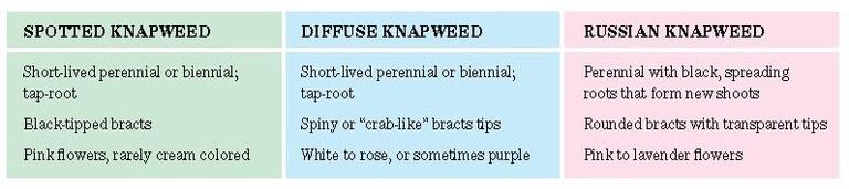 Knapeed table