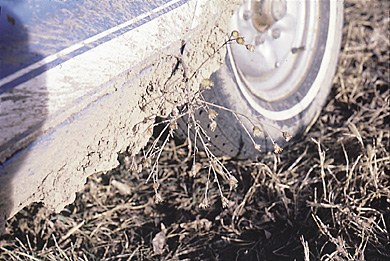 Inspect vehicles carefully if they have come from a knapweed infested area.