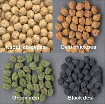 Photo by Pulse Growers
