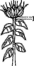 R-2 Line Art