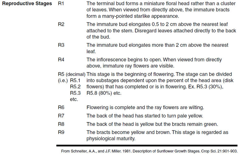 Reproductive Stages