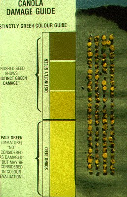 Green seed test guide