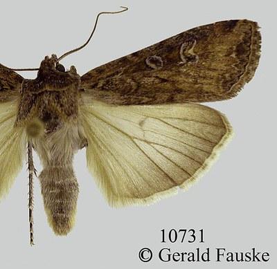 Photo, G. Fauske, NDSU