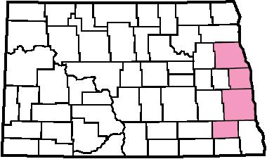 Plumeless Thistle