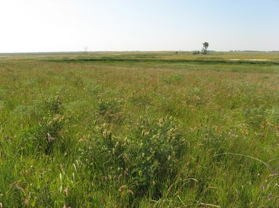 Completed prairie reconstruction site