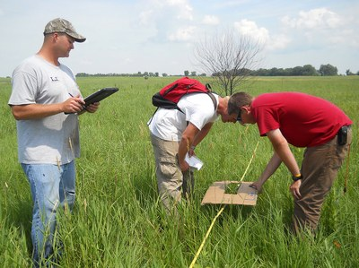 Evaluating a prairie reconstruction