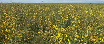 A spiked seed mixture helps to compete with weeds