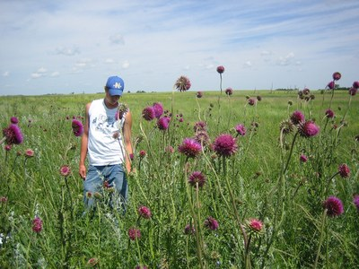 Site invaded with musk thistle