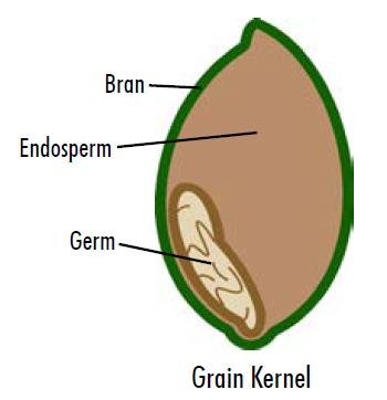 Grain Kernal