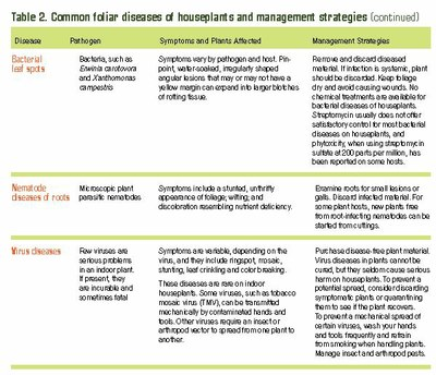 More common foliar diseases of houseplants and management strategiesand maamamam