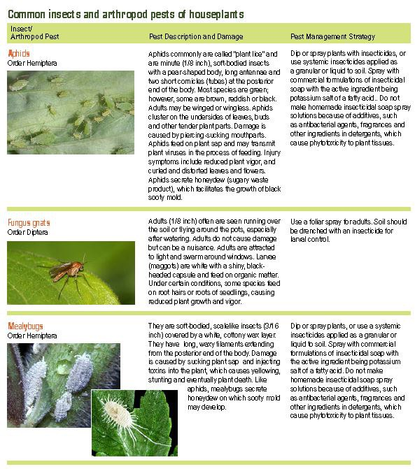 Common insects and arthropod pests of houseplants