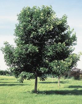 ND Tree Handbook