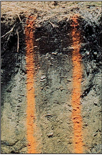 slice of soil showing layers