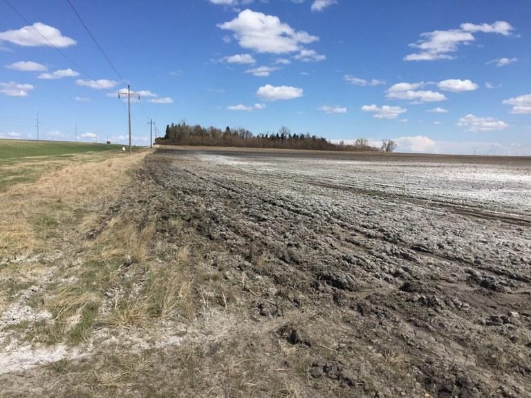 salt-affected soil