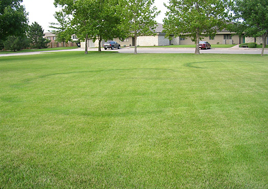 Photo courtesy of Derek Settle, Kansas State University, Dept of Plant Path
