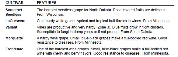 Grape Chart