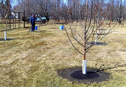 Prairie-Dawn-Orchard-1